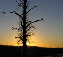 Silhoutte on The Tree by tmarie1