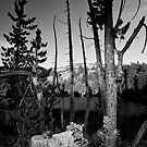 Tamarack by Kurt Golgart