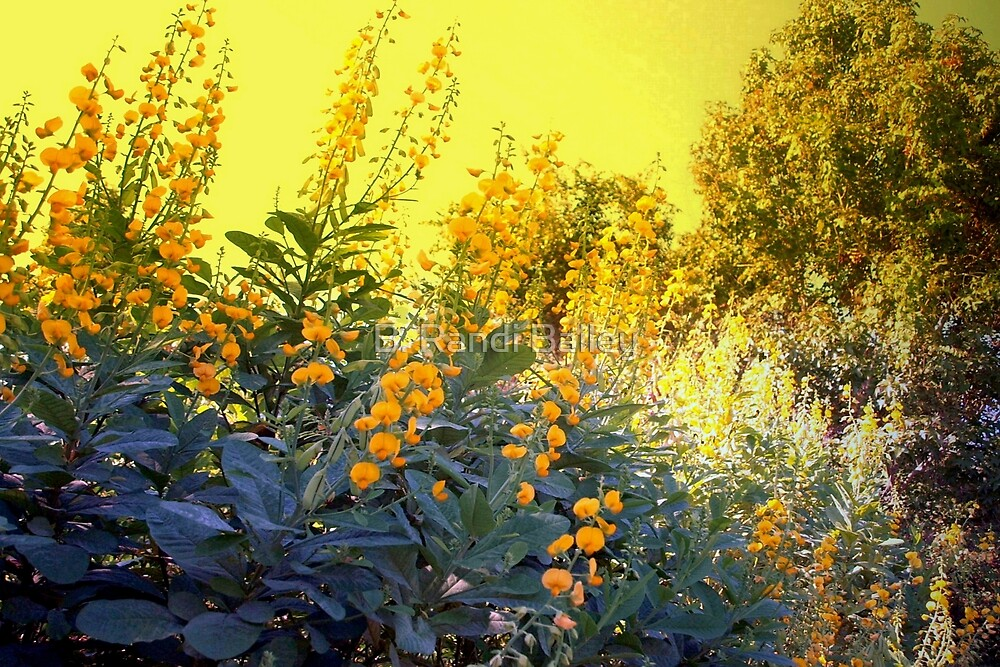 Gold-drenched landscape by ♥⊱ B. Randi Bailey