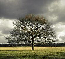 Tree in Richmond Park by photontrappist