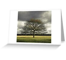 Tree in Richmond Park Greeting Card