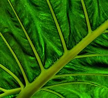 Green Veins by Gaby Swanson  Photography