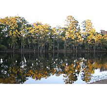 cypress trees mirror immage Photographic Print