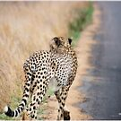 A MOMENT IN TIME - THE CHEETAH by Magaret Meintjes