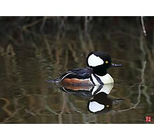 Hooded Merganser- Male Photographic Print