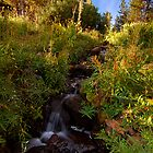 Tahoe Stream by Kurt Golgart