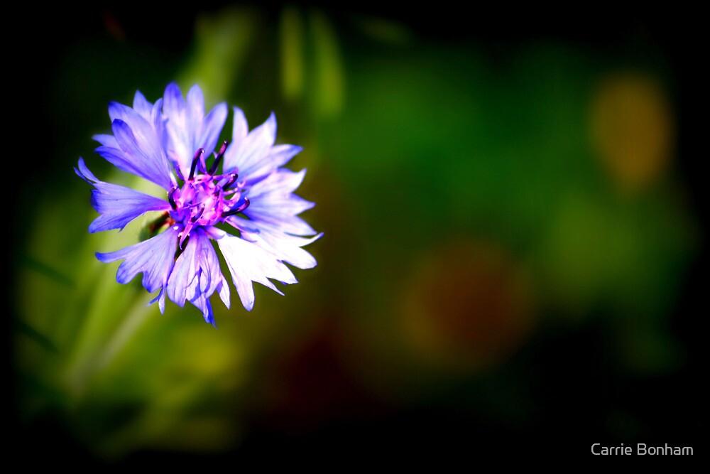 Wildflower by Carrie Bonham