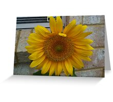 Sun in my own front yard Greeting Card