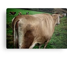 Cow Butt Metal Print