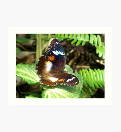 Butterfly on Syngonium leaf Art Print