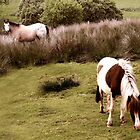 Dartmoor Pony and foal by James  Key
