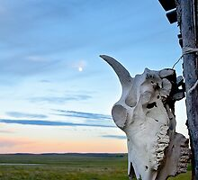 Montana, Skull and Sky by lorisong