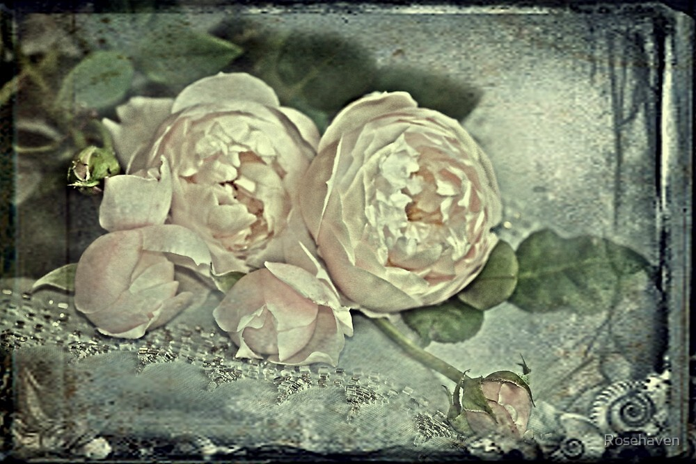 """""""Deliciously Delectable Roses ..."""" by Rosehaven"""