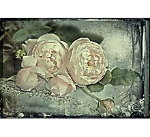 """Deliciously Delectable Roses ..."" Photographic Print"