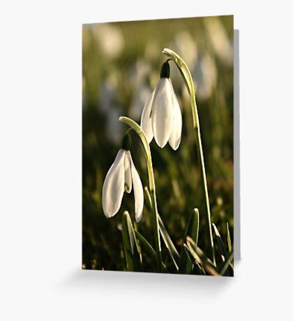 Snowdrops  #1 Greeting Card