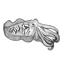Cuttlefish by SVaeth
