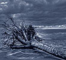 Fallen Warrior by Bluesoul Photography