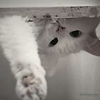 How Many Cats Does It Take to Screw in a Light Bulb?' by ibjennyjenny