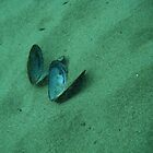 shell pic 2 by salagas