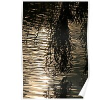 Weeping Willow Silhouette by Water Poster