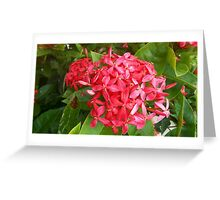 Spike Flower Greeting Card