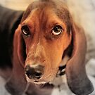 Odys, A Basset Hound by SuddenJim