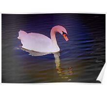 Swan mirror Poster