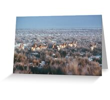 antelope... Greeting Card