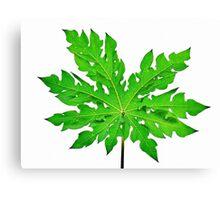 Knockedout Papaya Leaf  Canvas Print