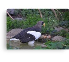 Sea Eagle Canvas Print