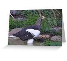 Sea Eagle 1 Greeting Card