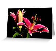 Pink Tiger Lilly Greeting Card