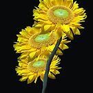 Sunflowers by Mistyarts