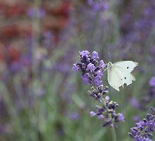 Butterfly Splendor by Sharon Hagler