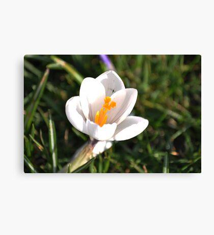 Hello Flower Canvas Print