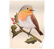 a robin on a holly berry tree Poster