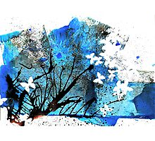 Out of the Blue Photographic Print