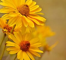 Yellow = Cheer by Laurie Minor