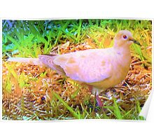 Gentle mourning dove Poster