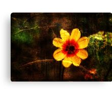 Beauty of Nature Shines Canvas Print