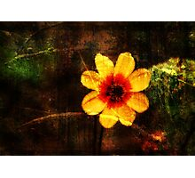 Beauty of Nature Shines Photographic Print