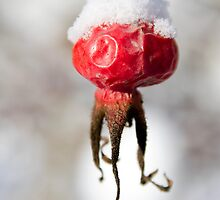 Snow Cap by Walter Quirtmair