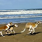 Beach Whippets by Dempsey