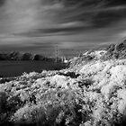 Battery Crosby, Presidio, San Francisco by Rodney Johnson