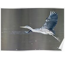 Heron Fly By Poster