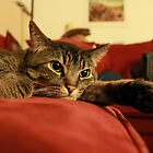 Kitty_Waiting on the Return of Kitty Master by agnesbonbon