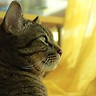 KItty_Looking into Distance by agnesbonbon