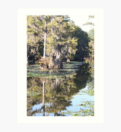 cypress trees shadowed on the river Art Print