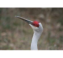 close up bird Photographic Print