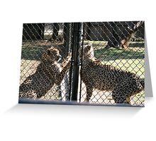 cheetah cat fight Greeting Card